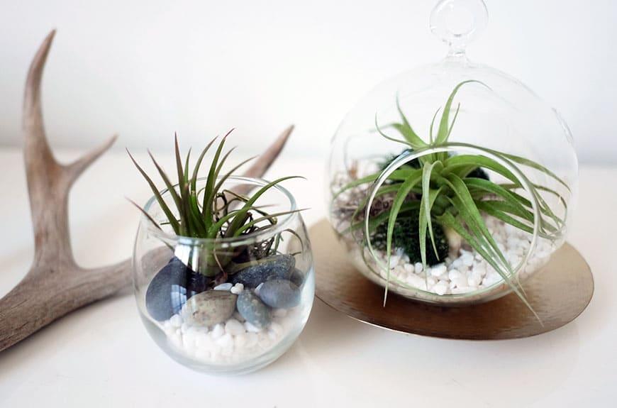 Terrarium potted air plants