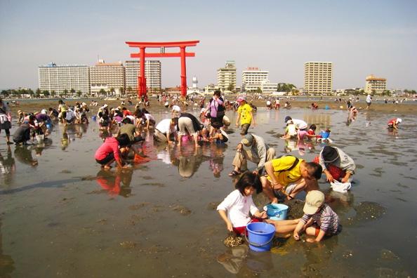 Japan during Spring- Japan Spring clam digging