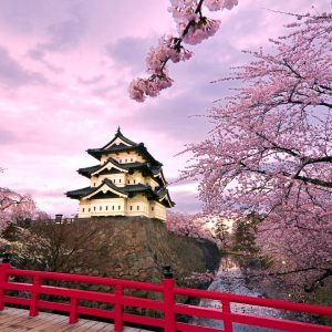 5 Activities to Do in Japan During Spring