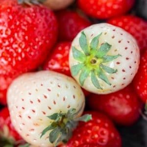 Ring in the Season of Love with White Strawberry