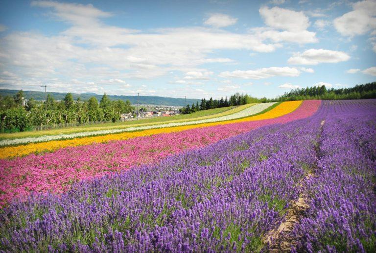 view flowers - lavendar