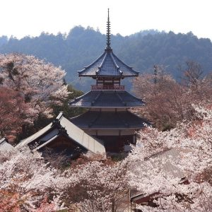 Best Places to View Flowers in Japan