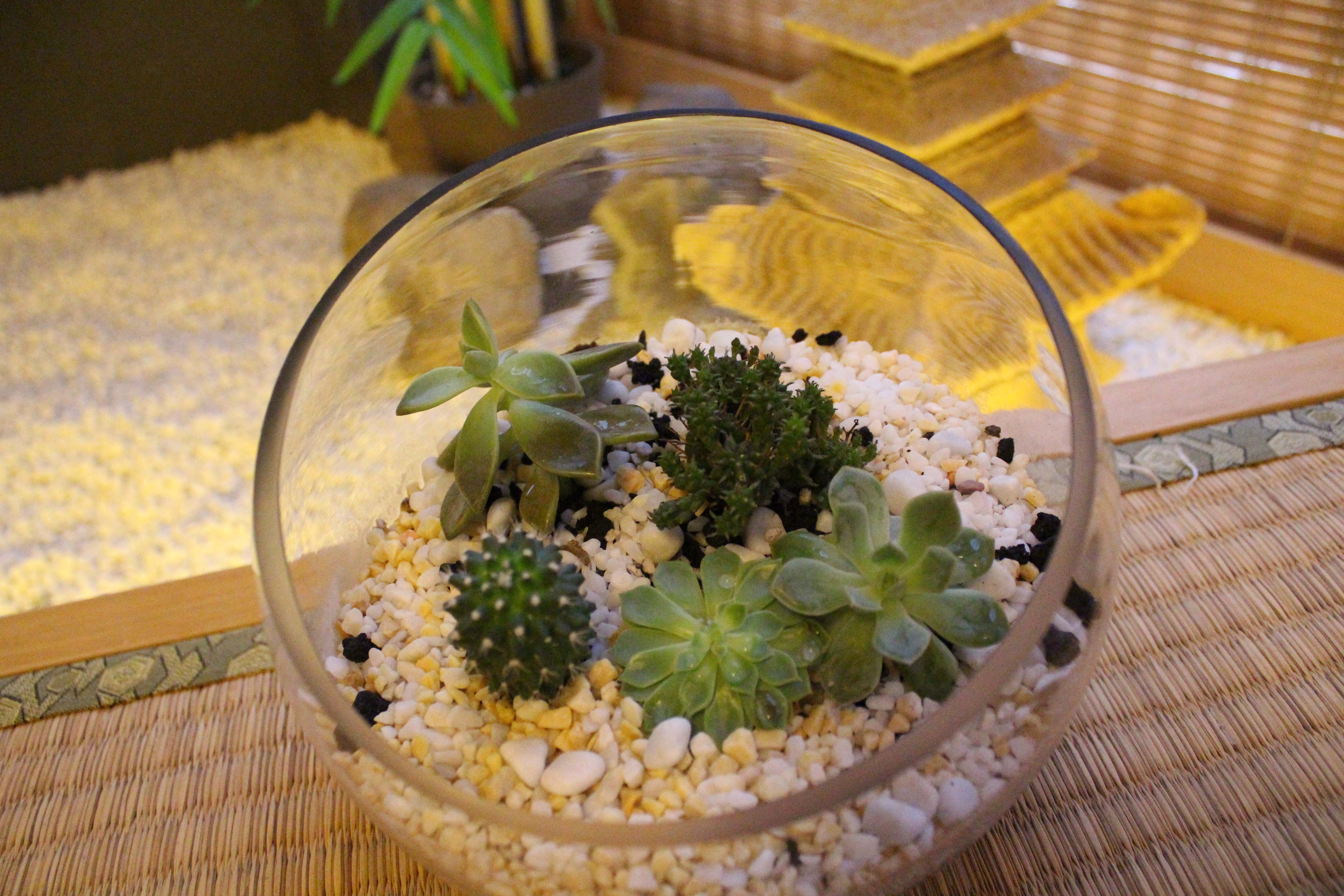 mother's day gift - terrarium