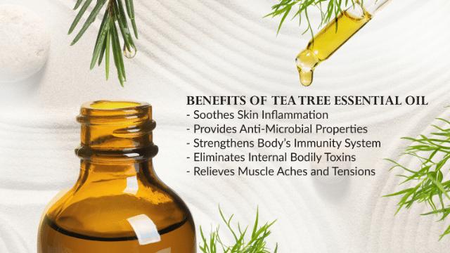 Coronavirus tea tree - Benefits of Tea Tree